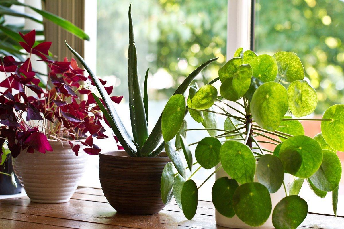 Как правильно перевозить комнатные растения?