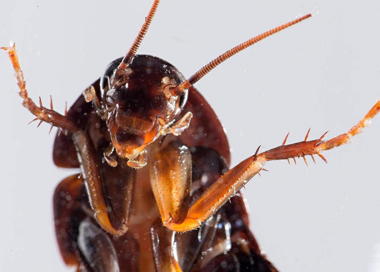 Как при переезде не перевезти тараканов?