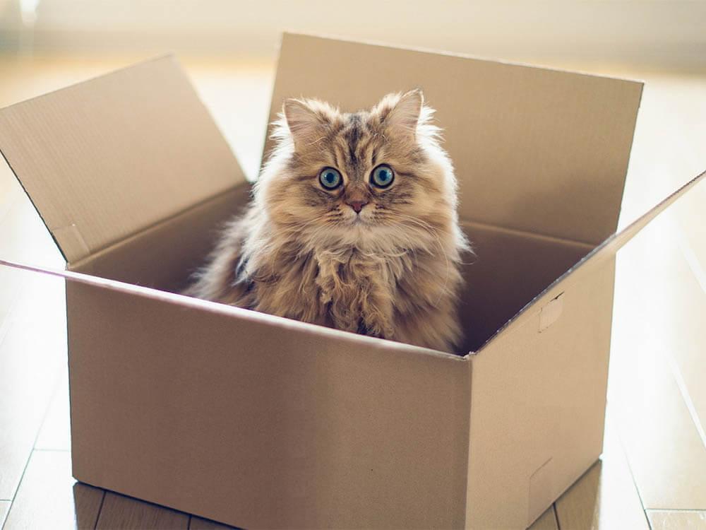 Переезд кошки в новое место