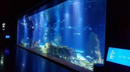 Как перевезти аквариум в другой город?